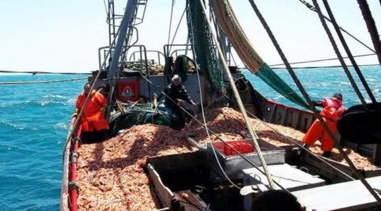 El 70% de desembarques de langostino se hizo en puertos de Chubut