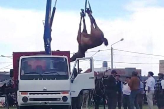 Polémica por la muerte de un caballo en el Festival de Doma