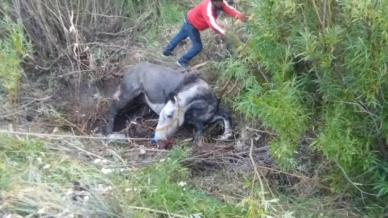 El equino fue rescatado.