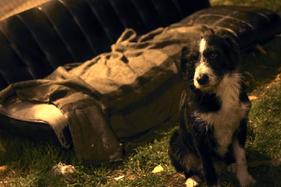 Maltrato animal: sujeto ahorcó a su perro hasta matarlo