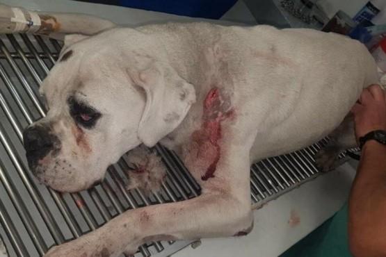Apuñaló a dos perros porque habrían atacado al suyo