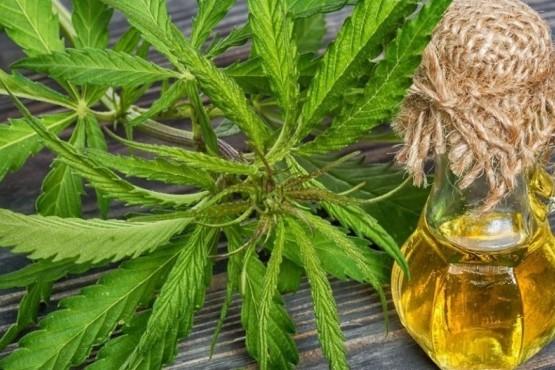 Reglamentaron las condiciones para la producción de aceite de cannabis medicinal