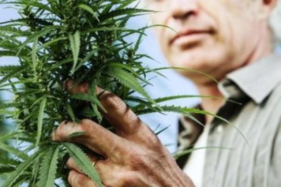 En Santa Cruz, sostienen el pedido para cultivar cannabis