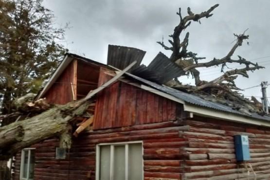 Un árbol aplastó una oficina pública