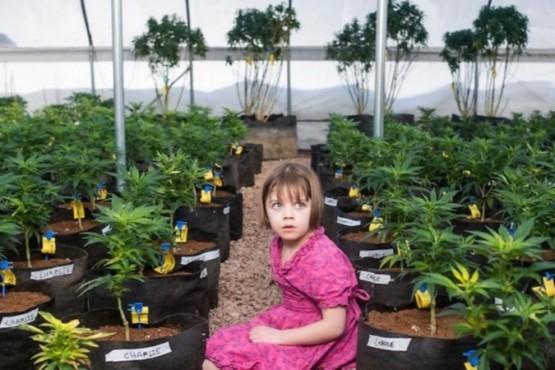 Osecac deberá proveerle cannabis