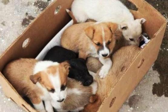 San Luis bajará los impuestos a quienes adopten animales de refugios