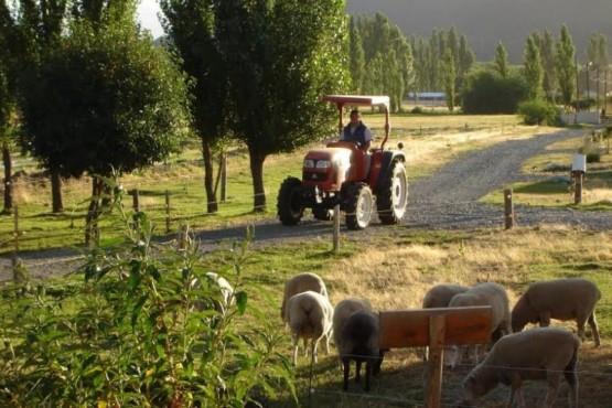 En Chubut registraron 3351 producciones agrarias