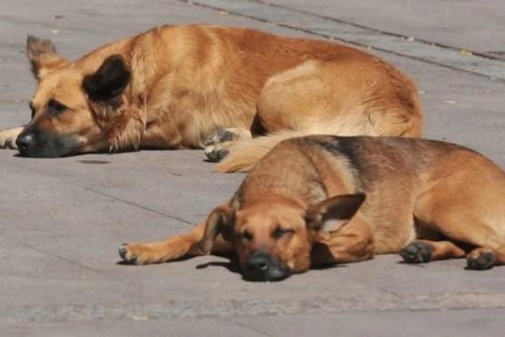 En Buenos Aires abandonar a un perro saldría hasta $42.800