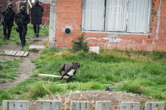 ¿Qué sucedió con el pitbull que atacó al vecino?