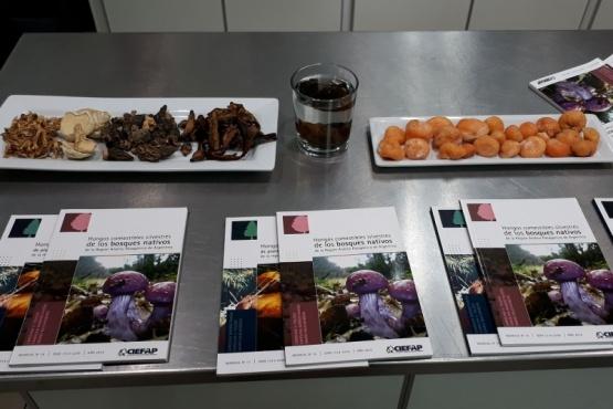 Proyecto regional patagónico busca potenciar el uso de hongos comestibles