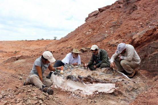 Descubren un extraordinario cementerio de animales de 220 millones de años en Argentina