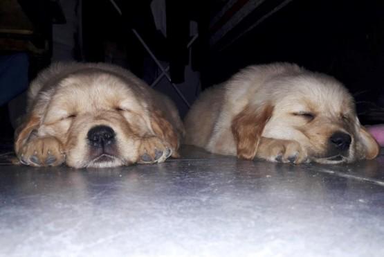 La División Canes le busca nombre a dos cachorras