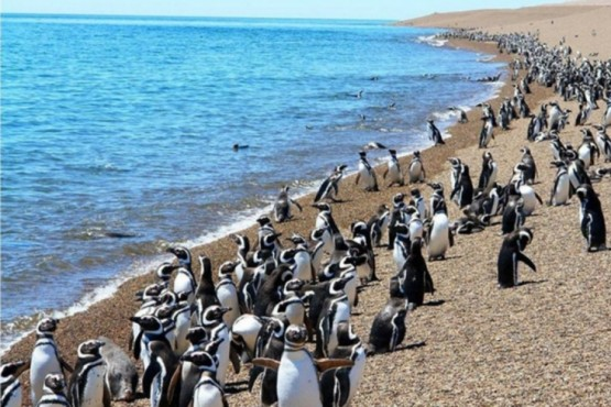 Finaliza la temporada de pingüinos
