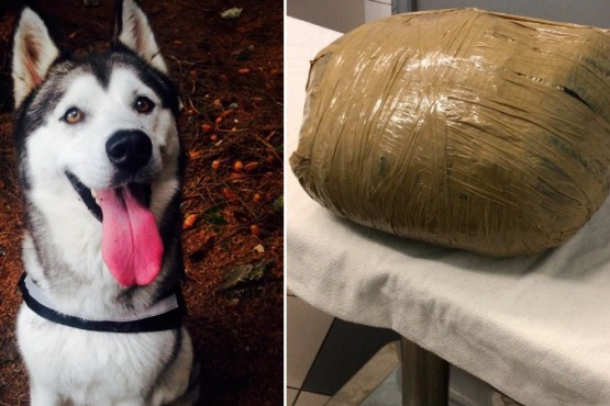 Dejó a su perra en una guardería y se la devolvieron en una bolsa