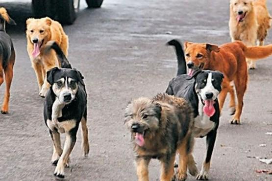 Hasta 90 mil pesos de multa por perros sueltos en la vía pública