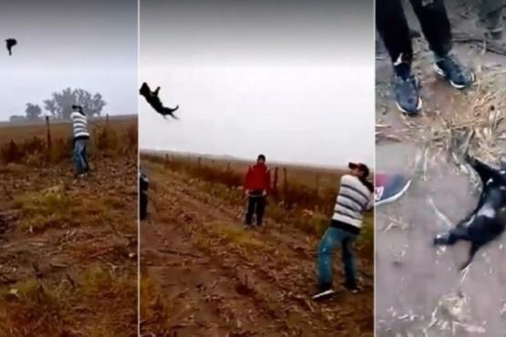 Brutal maltrato a un perro: lo lanzan como a una pelota y lo matan a batazos