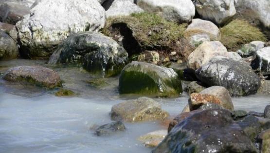 Provincia realizó campañas de prevención por la aparición del alga Didymo