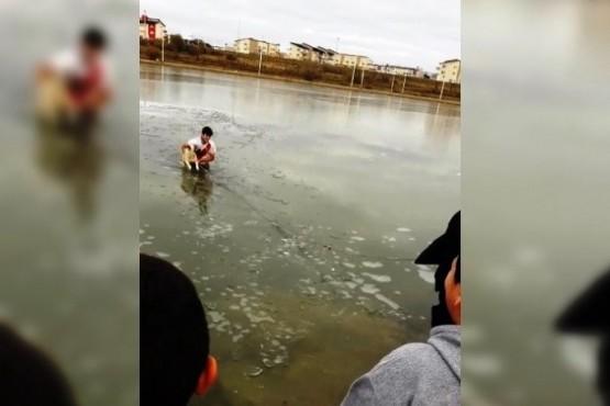 Murió el perro que rescataron en la Laguna Ortiz