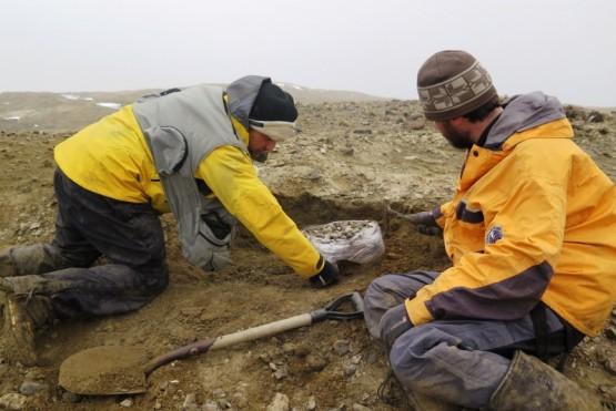 Descubren en la Antártida un reptil gigante de la última época de los dinosaurios