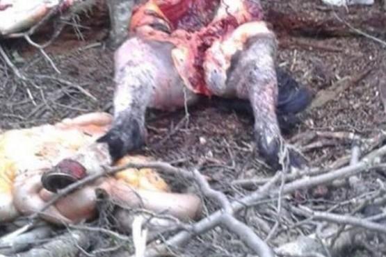 Por primera vez llega a juicio una causa penal por maltrato animal