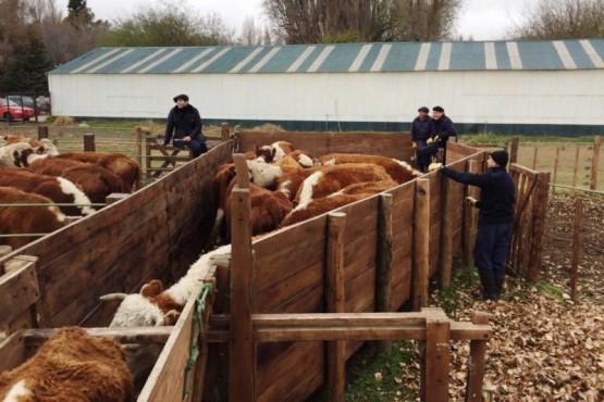 Ordenan secuestro preventivo de animales