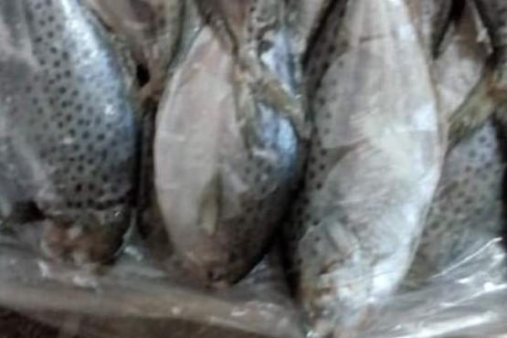Decomisaron 1326 cajas de pescado sin procesar