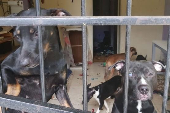 Perros encerrados en un departamento de Constitución. Intervino la Justicia y fueron rescatados.