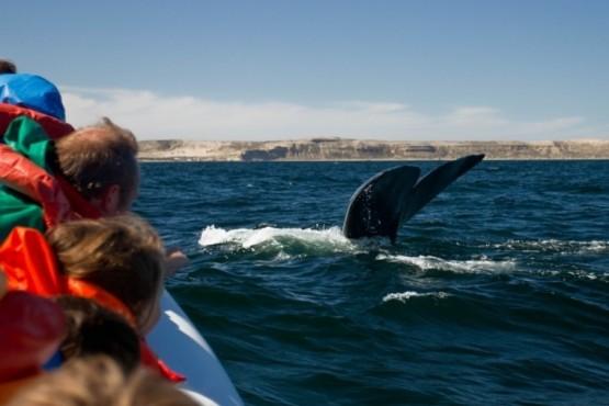 El avistaje de ballenas de Península Valdés, nominado a un premio internacional