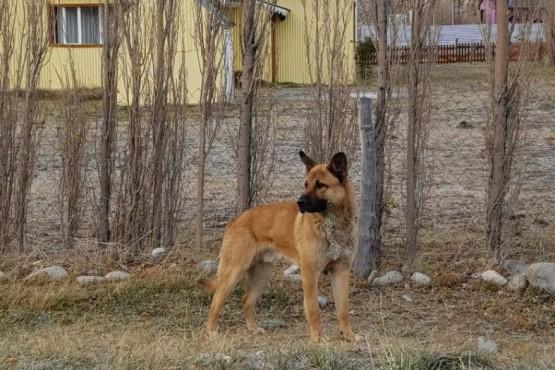 Instalarán un centro de salud animal en El Chaltén