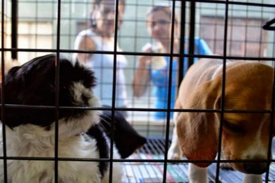 Quieren prohibir la venta de animales domésticos y su exhibición en comercios