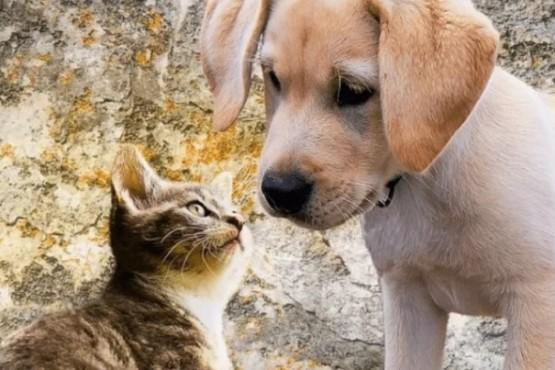 Confirmado: acariciar perros y gatos alivia el estrés