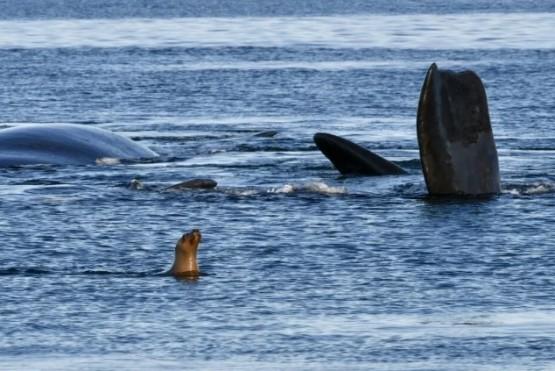 Madryn celebra el Día Mundial de las Ballenas y los Delfines