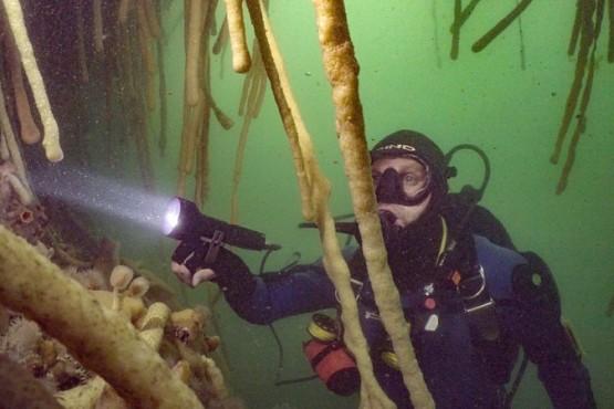La riqueza subacuática de Santa Cruz