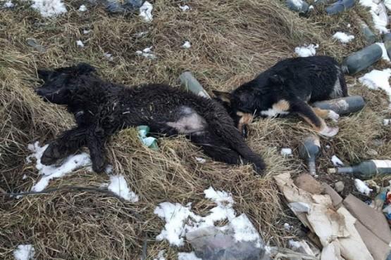 Denuncian que perros fueron envenenados y baleados