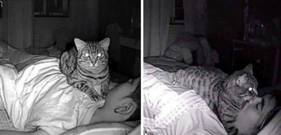 Descubrió que su gato lo asfixiaba por las noches al revisar la cámara de seguridad