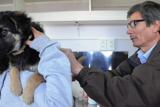 Basualto cruzó a Leal por poner en duda las estadísticas de castración de mascotas