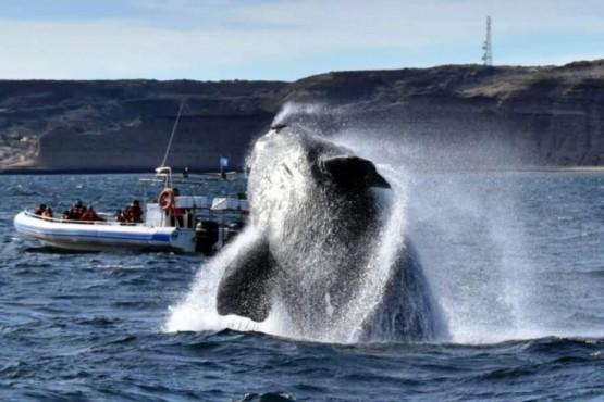 Península Valdés recibió un 30 % más de turistas que en 2018