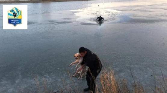 Bomberos héroes rescataron un perro en la Laguna