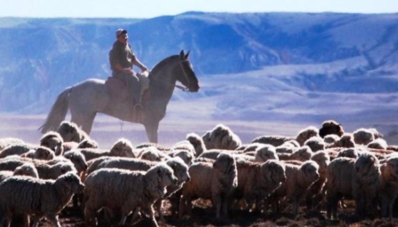 Productores piden políticas para erradicar el abigeato de los campos. (Ilustrativa).