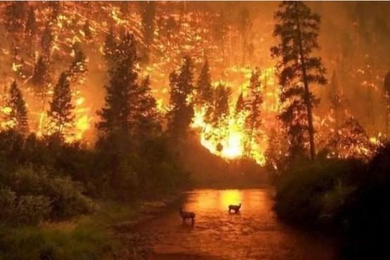 Así se ve el gigantesco incendio en el Amazonas desde el espacio