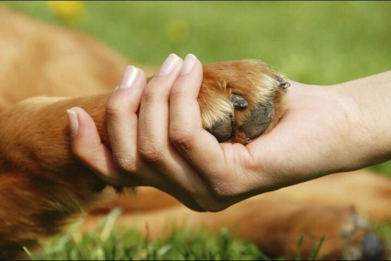 Municipio promueve una jornada de adopción de mascotas