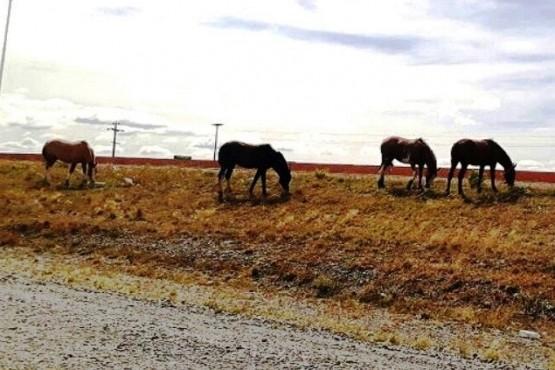 Se firmó el acuerdo para atender la problemática de equinos sueltos