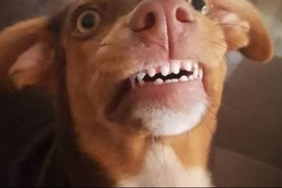 Una perra le robó la dentadura postiza a una abuela y sus fotos enloquecieron a todos