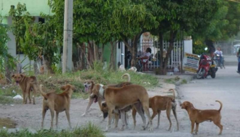 Jauría de perros atacó al pequeño (Foto ilustrativa)
