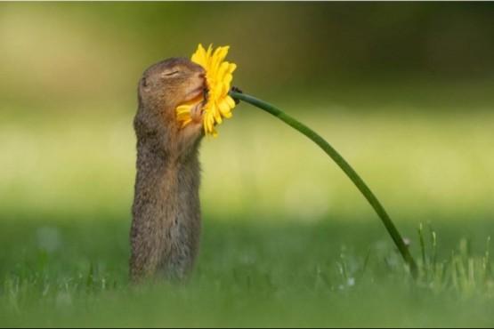 El momento en que una ardilla se detiene a oler una flor en la ciudad de Viena, Austria, es una escena viral que está encantando a los internautas (Instagram).