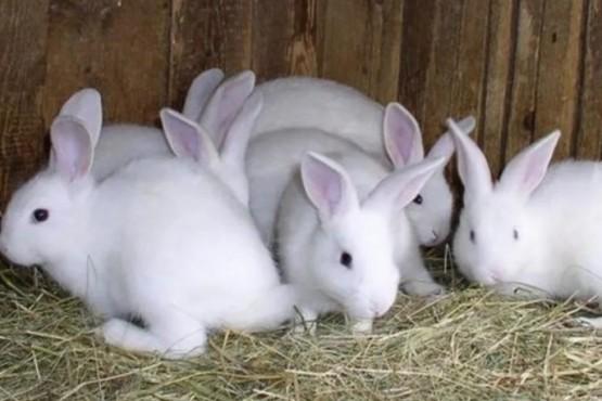 Veganos intentaron rescatar conejos de una granja y mataron a 100