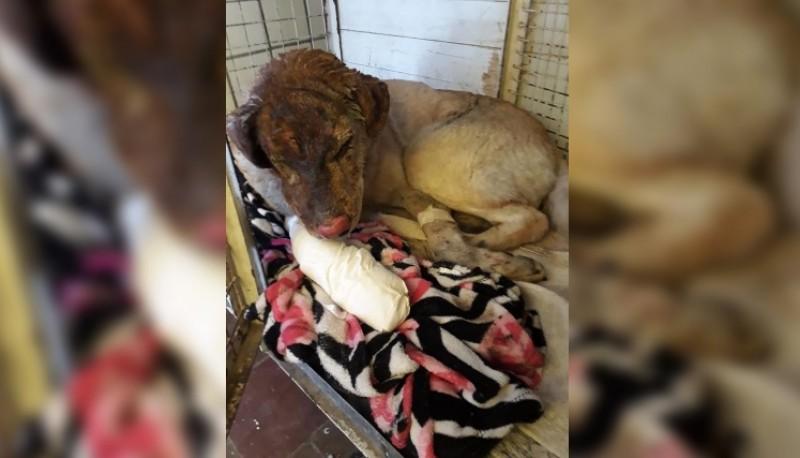 El can sufrió quemaduras en su cuerpo.