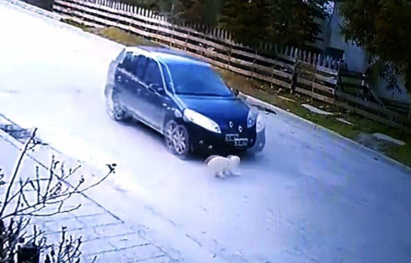 Momento del atropello del felino.