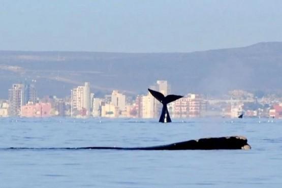 Buen clima en Puerto Madryn.