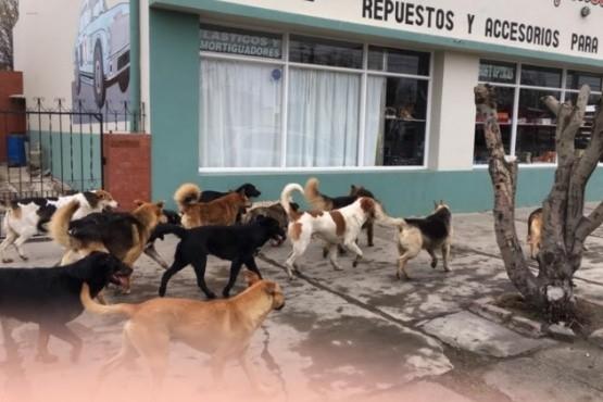 Perros en Río Gallegos (Foto archivo).